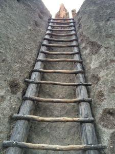 ladder--steve?