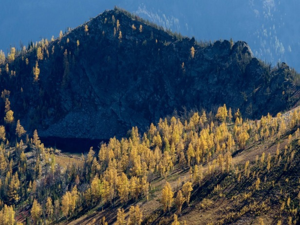 Alpine larch shines in a lake basin visible from the top of St. Mary's Peak.