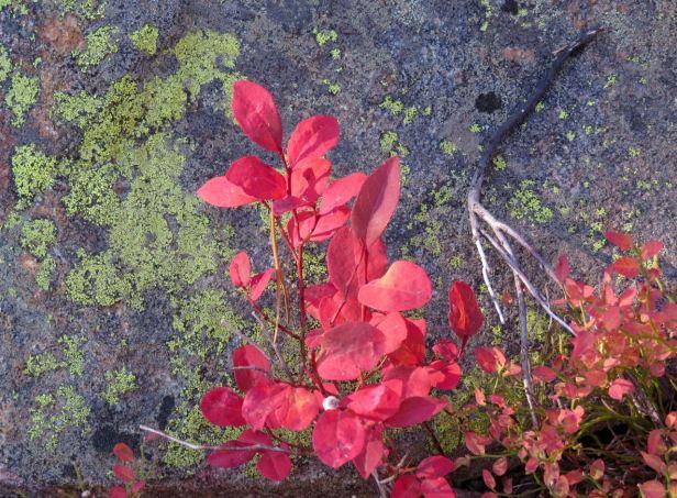 redleaf&lichen