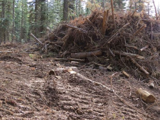 Current logging close to the rim of Hells Canyon - a travesty.
