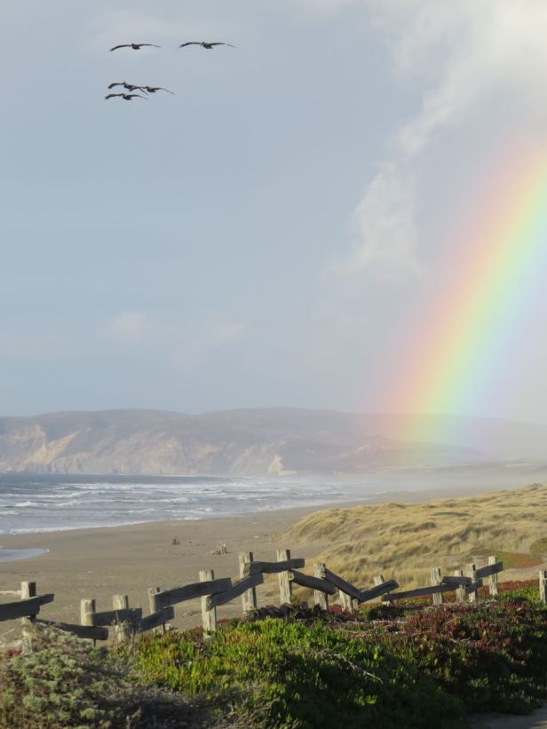 Rainbow with pelicans-North Beach pt reyes