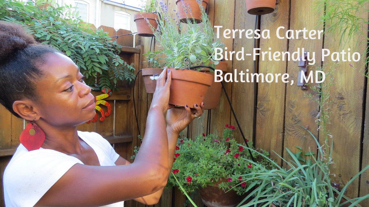 Terresa Carter-bird-friendly