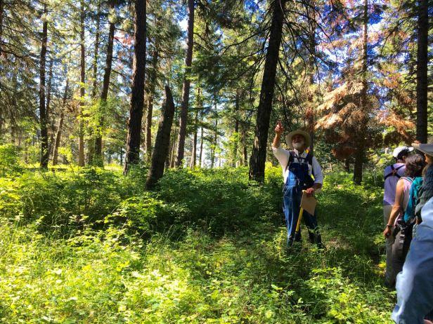 Andyinterpretingtheforest