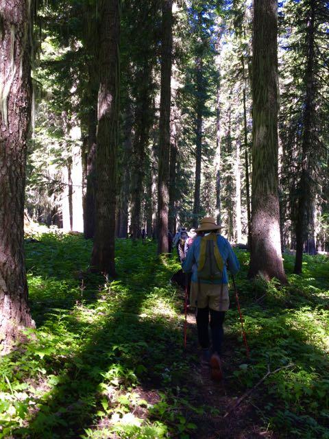 Umatilla hike in mixed fir/spruce