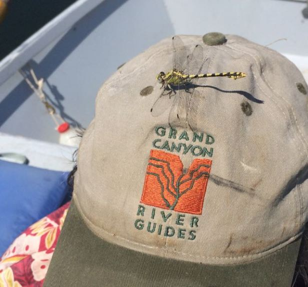 dragonfly on Ric's dory hat