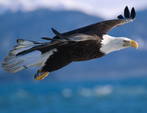 eagle- manataka.org
