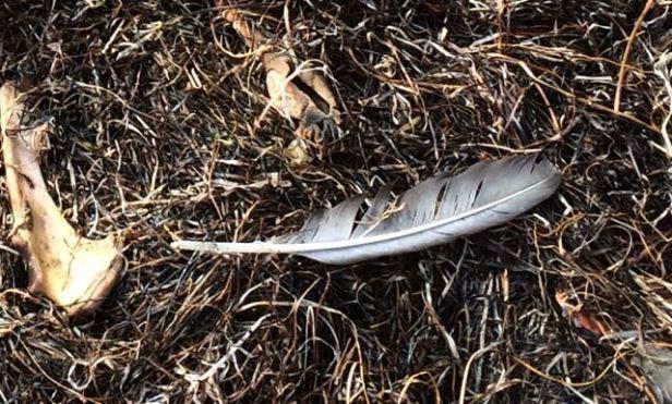 feather&bone