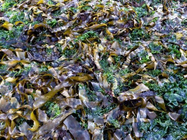 seaweed textures