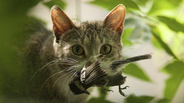 catwithbird