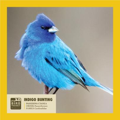 SMB IN Bird 2