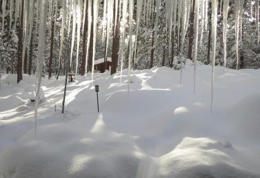 winter wonderland backyard