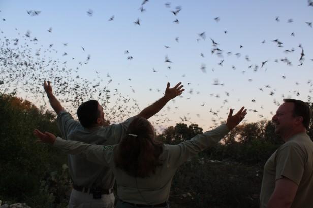 Millions of Bats