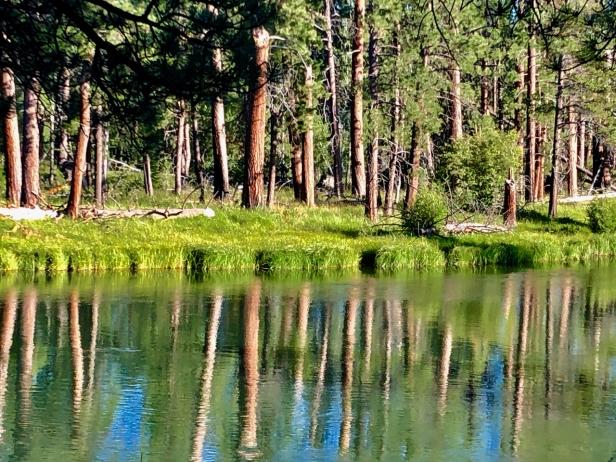 Deschutes pine reflections.jpg