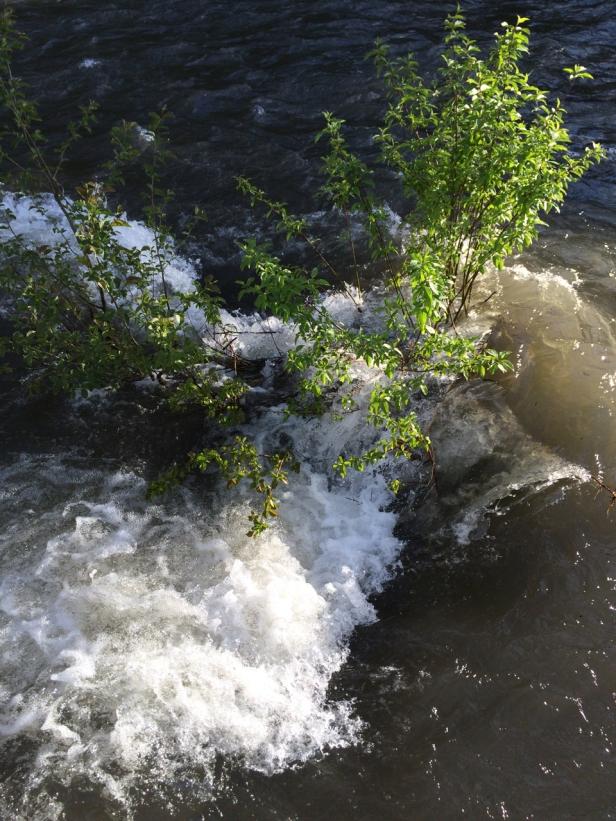 Imnaha -high water.jpg