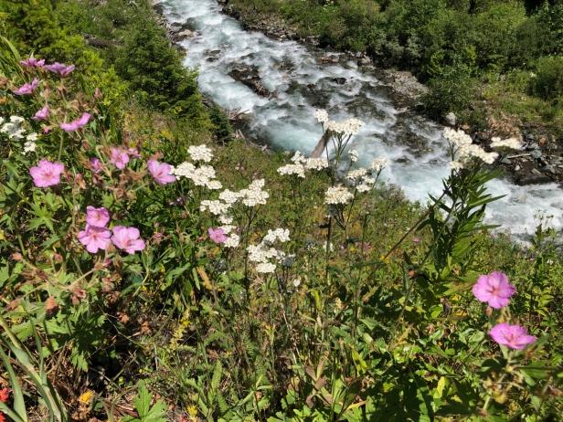 west fork wallowa wildflowers.jpg