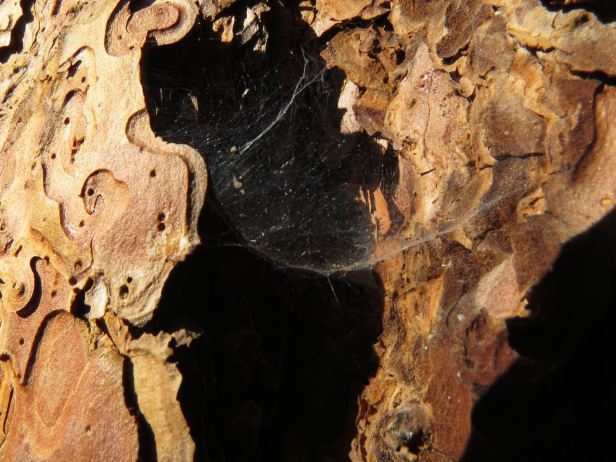 pp bark with spider web
