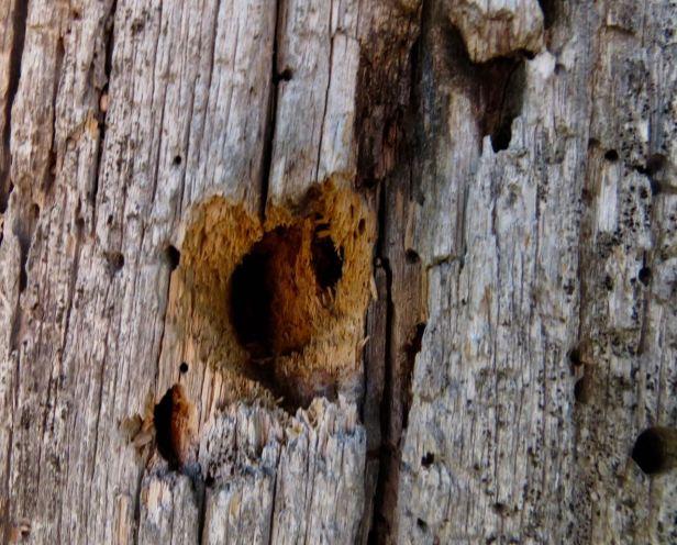 woodpecker hole