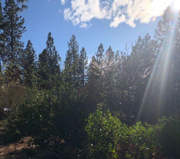 sun beam on yard evening