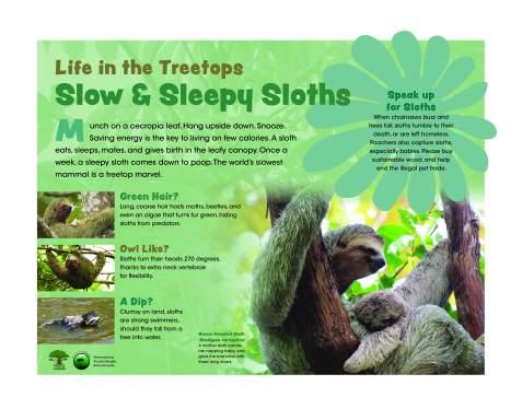 SLOW AND SLEEPY SLOTHS-FINAL-080420